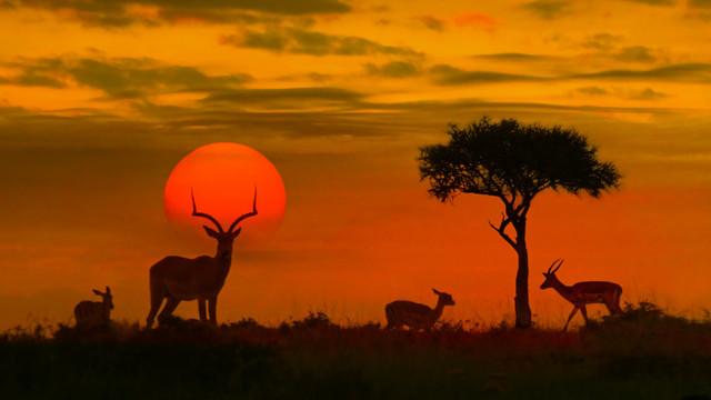 Declin catastrofal. Populațiile de animale sălbatice au scăzut cu peste două treimi în 50 de ani din cauza activității umane