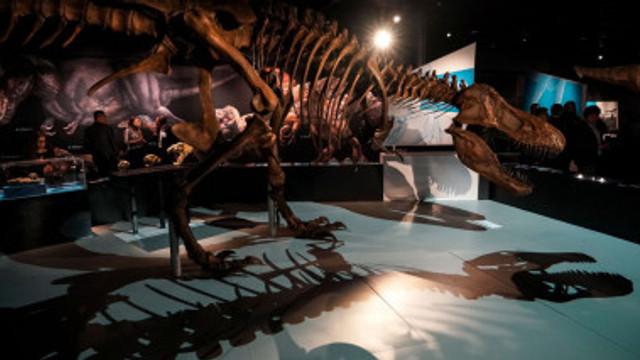 A fost scos la vânzare scheletul unuia din cei mai mari Tiranozauri din lume. Suma de la care începe licitația