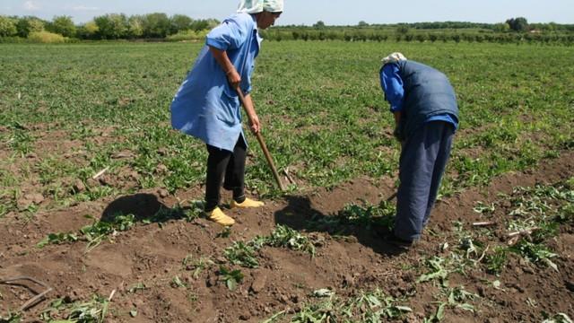 Producătorii agricoli care au fost afectați de secetă și grindină mai au timp până mâine, 18 septembrie, să depună dosarul pentru a primi subvenții din partea statului
