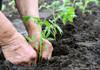 Campania de însămânțare a culturilor de toamnă în R.Moldova este pe ultima sută de metri. Ce spun agricultorii despre ploile din ultimele luni
