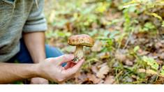Cum putem preveni intoxicațiile cu ciuperci? Recomandările specialiștilor