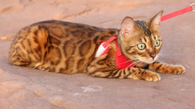 Surpriză de proporții pentru un cuplu care a cumpărat online cu 6.000 € o pisică