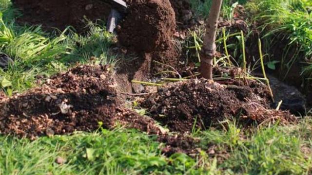 Sâmbătă la Chișinău e zi de plantare a arborilor