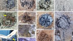 Oamenii de știință au descoperit o nouă specie de plantă, în fosile cu o vechime de 15 milioane de ani