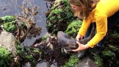 O fetiță din Australia a salvat un rechin eșuat în urma refluxului