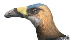 O pasăre de pe vremea dinozaurilor, cu ciocul în formă de lamă de coasă, aduce noi informații despre diversitatea aviară (studiu)