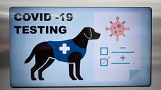 """Câinii ar putea deveni esențiali în oprirea răspândirii coronavirusului. Cum funcționează """"testul canin"""" pentru COVID-19"""