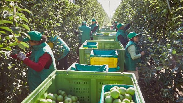 În sectorul horticol, necesarul de forță de muncă este acoperit de doar 13%