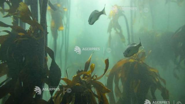 STUDIU   Fosile considerate dovezi ale primelor animale de pe Pământ s-au dovedit a fi alge