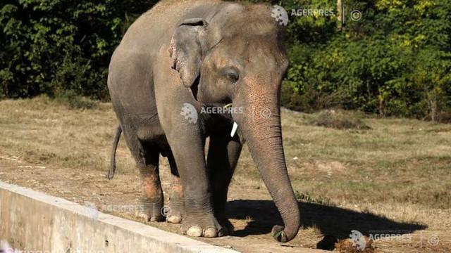 Pakistan: Grădina zoologică din Islamabad criticată pentru rele tratamente aplicate elefantului Kaavan a fost închisă