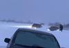 Noapte albă în sud-estul țării. 3 sate din raionul Căușeni, 26 din Ștefan Vodă și vama Palanca blocate în nămeți, 13 instituții școlare trec pe online (ZDG)