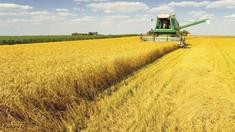 Agricultură | Gerurile din ultimele zile nu au afectat culturile de toamnă, însă lipsa precipitațiilor în următoarele luni ar putea afecta recolta de cereale din acest an