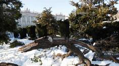 Autoritățile din Madrid vor tăia 80.000 de copaci avariați de furtuna de zăpadă