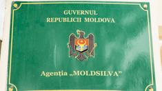 """Agenția """"Moldsilva"""" s-a autosesizat, după ce ieri, în mediul online, au fost plasate câteva filmulețe în care mai mulți oameni ar fi fost surprinși tăind copaci în Rezervația Naturală """"Plaiul Fagului"""