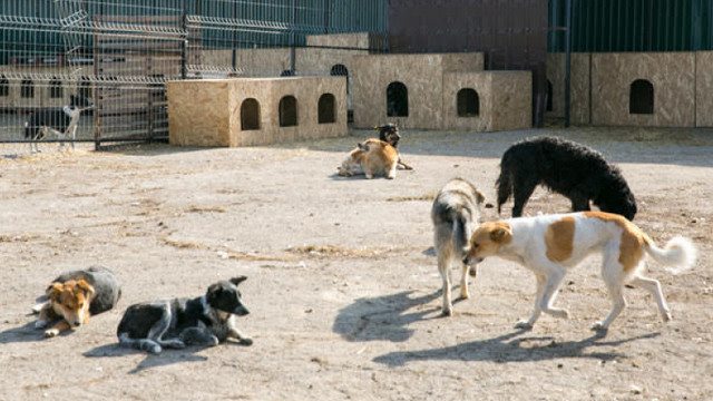 La Centrul de capturare și sterilizare a animalelor fără stăpân sunt circa 870 de câini