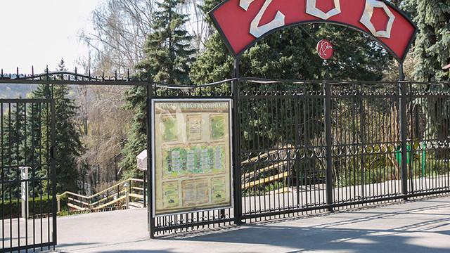 Angajatul de la zoo, atacat de tigru, a decedat
