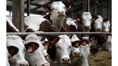 Ministerul Agriculturii a lansat primul apel de subvenționare per cap de animal