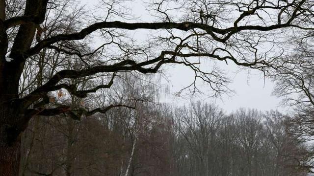 Germania raportează cea mai mare oscilație săptămânală de temperatură înregistrată de la debutul măsurătorilor meteorologice