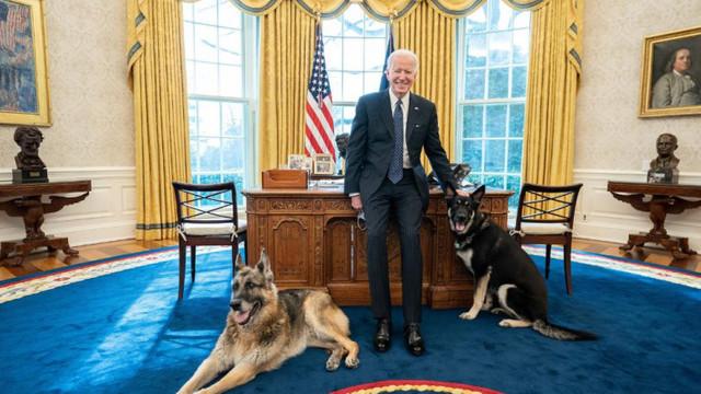 """""""Primii câini"""" ai SUA. Joe Biden și-a adus animalele de companie în Biroul Oval"""