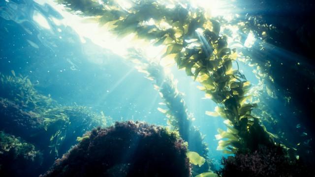 Remediul contra Covid-19 ar putea exista pe fundul oceanelor. O nouă teorie dă speranțe pentru tratamentul oricărei pandemii viitoare