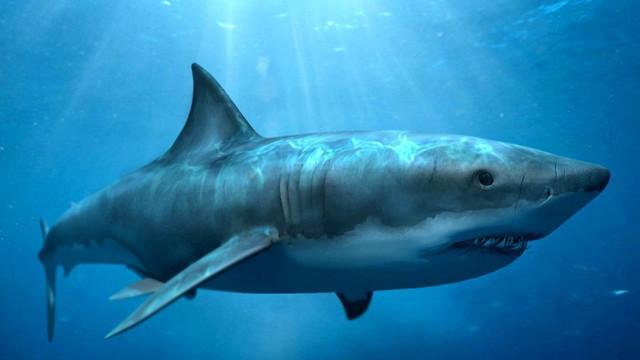 Noua Caledonie | Un bărbat a fost atacat mortal de un rechin