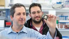 Israel: Cercetătorii au dezvoltat o platformă pe baza cipurilor bionice pentru testarea eficacității medicamentelor