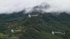 Două treimi din suprafața originală a pădurii tropicale din lume au fost distruse sau au fost degradate (ONG)