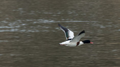 Pasăre rară, filmată în Parcul Natural Lunca Mureșului. De ce este surprinzătoare apariția ei acum, în România