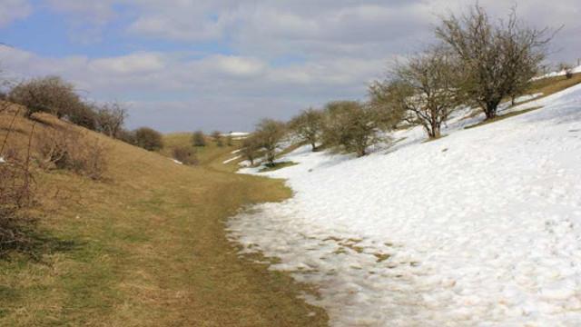 ANSA avertizează cu privire la riscurile dăunătorilor pentru gădini și livezi în condițiile de iarnă blândă