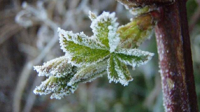 Ministerul Agriculturii | Asigurarea culturilor agricole ar putea diminua impactul viitoarelor înghețuri