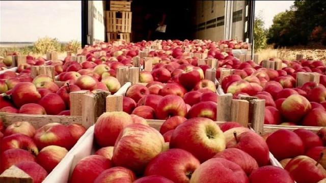 În R. Moldova, producerea fructelor rămâne principalul sector cu pondere în exporturi