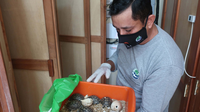 Valiză cu 185 de țestoase descoperită pe aeroportul din Galapagos