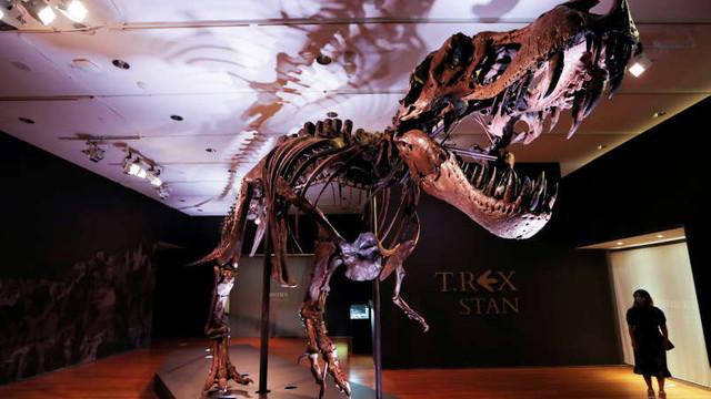 Dinozaurii din specia Tyrannosaurus rex ar fi vânat în haite, la fel ca lupii (studiu)