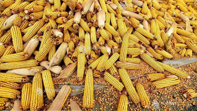 Prețurile la cereale sunt în creștere pe fondul îngrijorărilor cu privire la oferta mondială