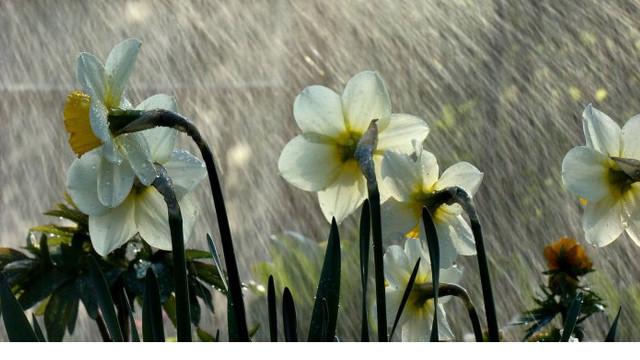 Meteorologii anunță un sfârșit de săptămână rece și local ploios