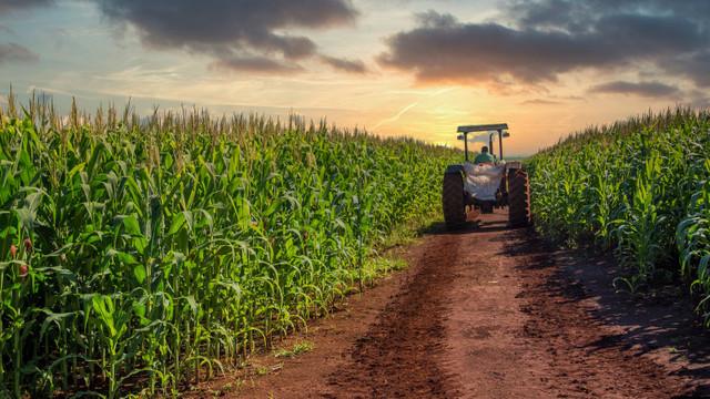 Prețurile la cereale sunt în creștere pe fondul îngrijorărilor cu privire la o scădere a producției