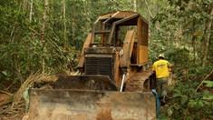 Defrișările în pădurea tropicală amazoniană din Brazilia, în creștere pentru a doua lună consecutiv