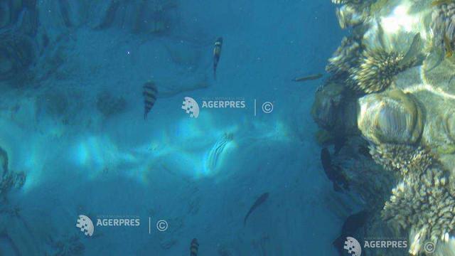 Un animal marin capabil să își regenereze toate organele, descoperit în Marea Roșie