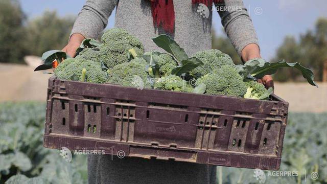 Consumul zilnic al unei porții de legume cu frunze contribuie la reducerea riscului de boli cardiovasculare (studiu)