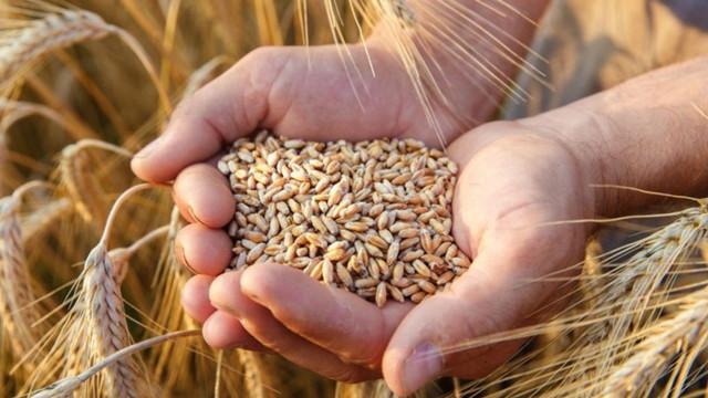 Alexandru Slusari a atras din nou atenția asupra exportului de grâu, anunțând intenția unei companii de a exporta 6 mii de tone