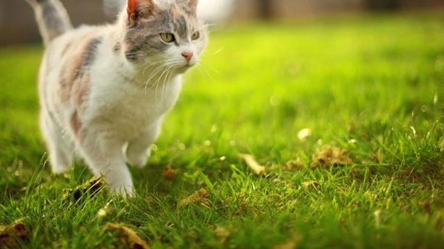 Moment istoric. Legea britanică va recunoaște animalele drept ființe cu drepturi - practici precum vânătoarea de trofee, interzise
