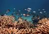 UNESCO: Marea Barieră de Corali ar trebui clasificată ca fiind ''în pericol''; Australia va contesta recomandarea