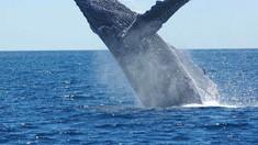 VIDEO | Un scafandru a fost în gura unei balene și a supraviețuit să povestească despre asta