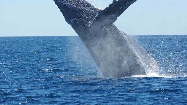 VIDEO   Un scafandru a fost în gura unei balene și a supraviețuit să povestească despre asta