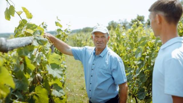 Micii vinificatori din Moldova sunt interesați să producă vinuri organice