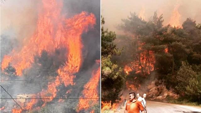 Nordul Libanului este cuprins de flăcări. Un copil de 15 ani a murit în timp ce îi ajuta pe pompieri să stingă incendiile de vegetație