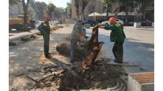 În urma vijeliei de săptămâna trecută, în capitală au căzut 28 de arbori