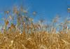 Patru producători ecologici moldoveni vor participa la o întâlnire de afaceri în Sicilia