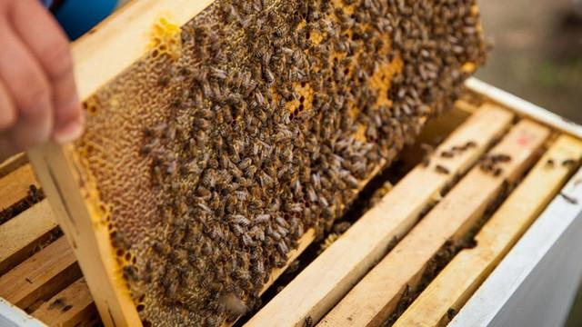 Tinerii vor putea studia meseriile de apicultor și cultivator de bacifere de la distanță