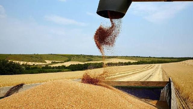 Expert: Recolta de grâu, cea mai mare din ultimii 30 de ani
